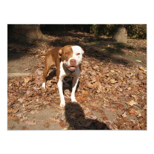 Tan and White Dog Smiling Outside in Fall Photographic Print