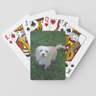 "Tan ""Benji"" Type Mutt on Grass Playing Cards"