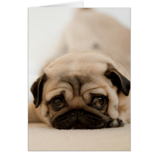 Tan Female Pug Card