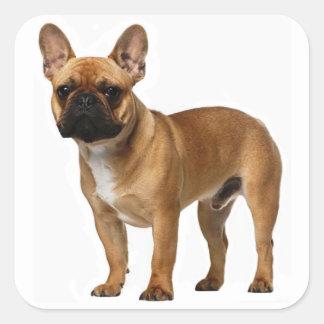 Tan French Bulldog Brown / Black Puppy Dog Square Sticker