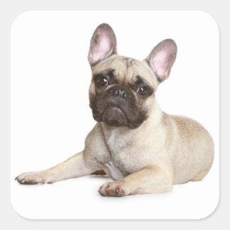 Tan French Bulldog Brown Puppy Dog Square Sticker