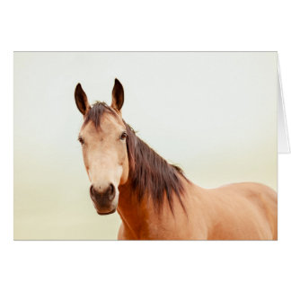 Tan horse looks at you card