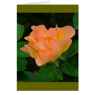 TANGERINE COLORED ROSE (PHOTOG) NOTE CARD