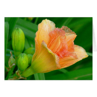 TANGERINE DAYLILY AND GREEN FOLIAGE NOTE CARD