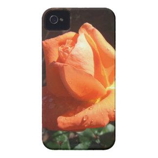 Tangerine Rose iPhone 4 Cases