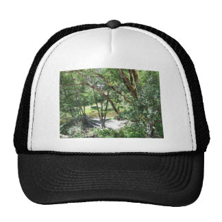Tangle of Trees Hats