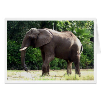Tantor Greeting Cards