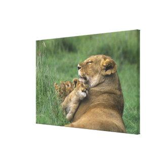 Tanzania, Ngorongoro Crater. African lion mother Canvas Print