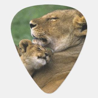 Tanzania, Ngorongoro Crater. African lion mother Guitar Pick