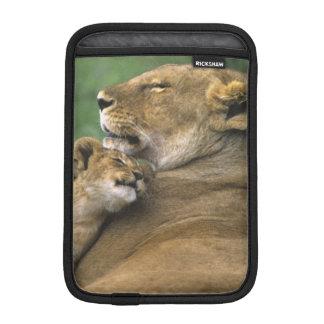 Tanzania, Ngorongoro Crater. African lion mother iPad Mini Sleeve
