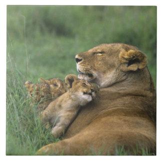 Tanzania, Ngorongoro Crater. African lion mother Tile