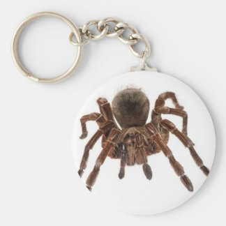 TARANTULA BASIC ROUND BUTTON KEY RING