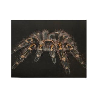 Tarantula Big Spider Hairy Arachnoid Wood Poster