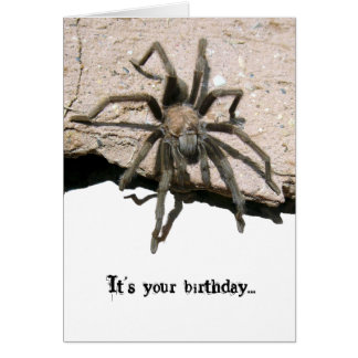 Tarantula Birthday Card