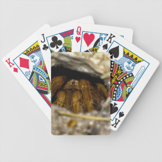 Tarantula Hide-Away Bicycle Playing Cards
