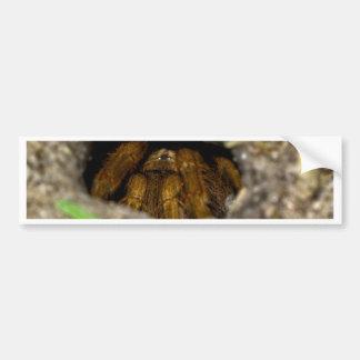 Tarantula Hide-Away Bumper Sticker