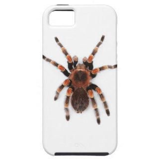 Tarantula iPhone 5 Case
