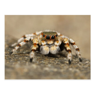Tarantula Jumping Bird Spider awesome accessories Postcard