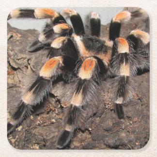 tarantula.png square paper coaster