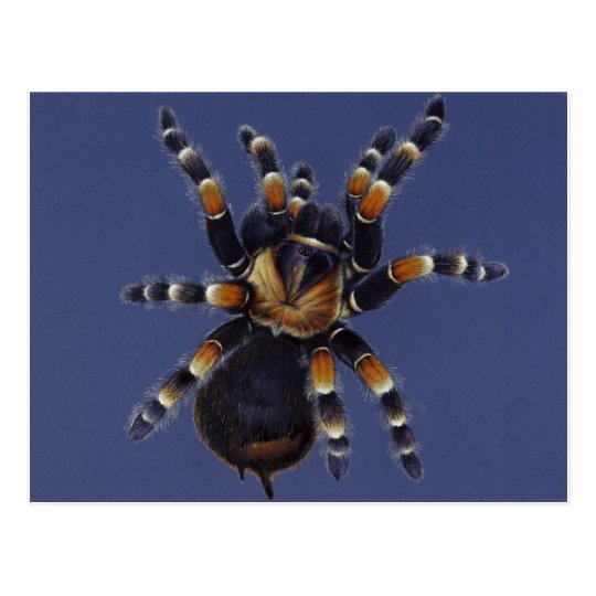 Tarantula Portrait Postcard