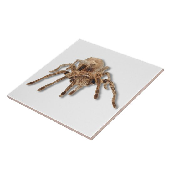 Tarantula spider 6x6 large square tile