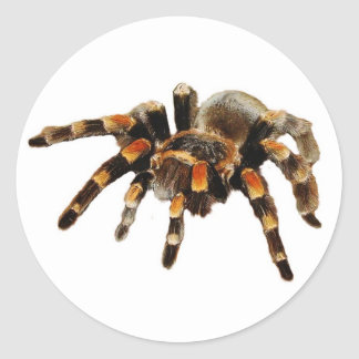 Tarantula spider black and orange round sticker