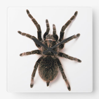 Tarantula Spider Wall Clock