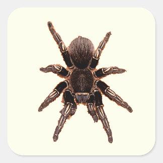Tarantula Stickers