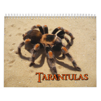 Tarantulas Wall Calendar