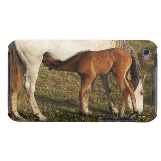 Tarifa, Cadiz, Andalusia, Spain iPod Touch Case-Mate Case