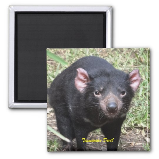 Tasmanian Devil Square Magnet