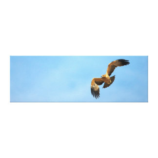 Tawny Eagle (Aquila Rapax) In Flight, Kgalagadi Canvas Print