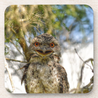 TAWNY FROGMOUTH RURAL QUEENSLAND AUSTRALIA COASTER