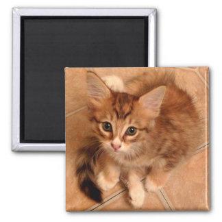 Tawny Kitty Magnet