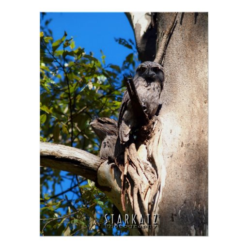 ~TAWNY MOUTHS~ PRINT