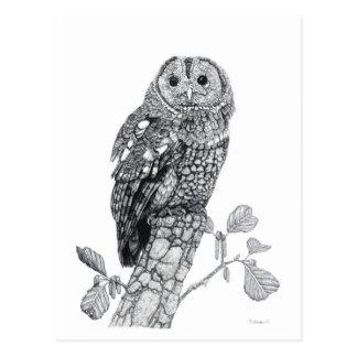 Tawny Owl - Blank Postcard