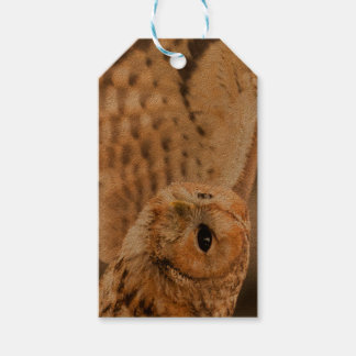 Tawny Owl in flight. Gift Tags