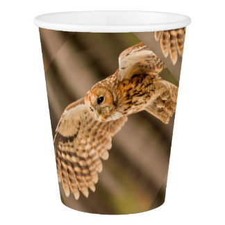 Tawny Owl in flight. Paper Cup