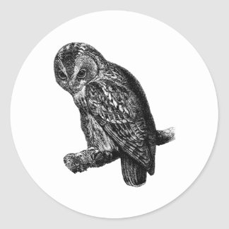 Tawny Owl Owls Bird Vintage Wood Engraving Classic Round Sticker