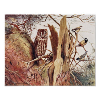 Tawny Owl Posters