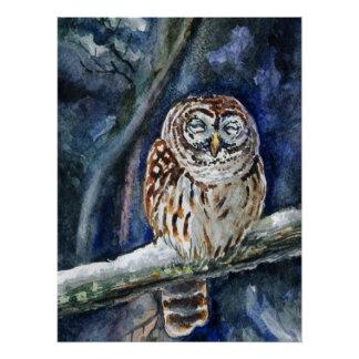Tawny  Owl watercolor