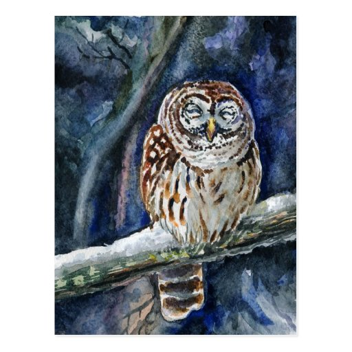 Tawny Owl watercolor painting Postcards