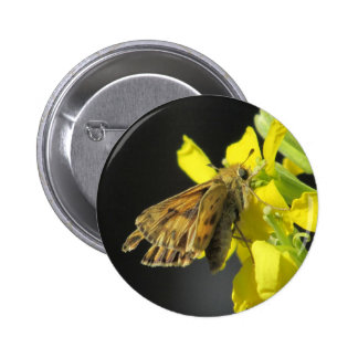 Taxiles Skipper Butterfly Button