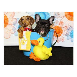 Taz and Teal - Dachshund & Bulldog -3 Postcard