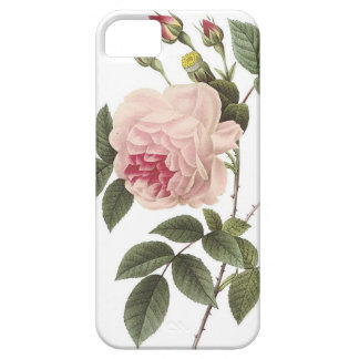 (TBA) Redoute Rose 2 iPhone 5 Covers