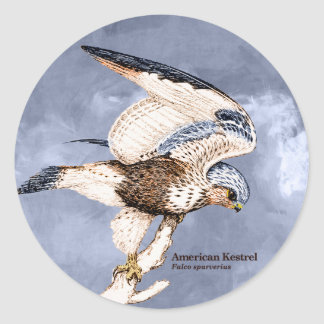 TCWC - American Kestrel Illustration Classic Round Sticker