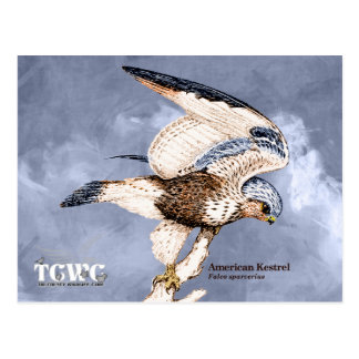 TCWC - American Kestrel Illustration with Logo Postcard