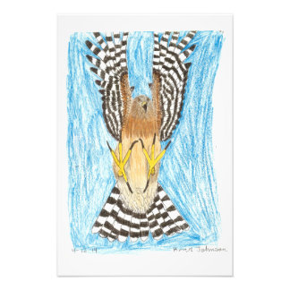 TCWC | Raptor in Flight | Youth Art Project Photographic Print