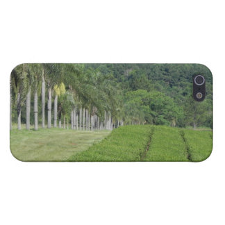 Tea Farm near Jungle iPhone 5 Cases