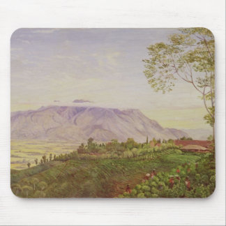 Tea Gathering in Mr Hoelle's plantation at Mouse Mat